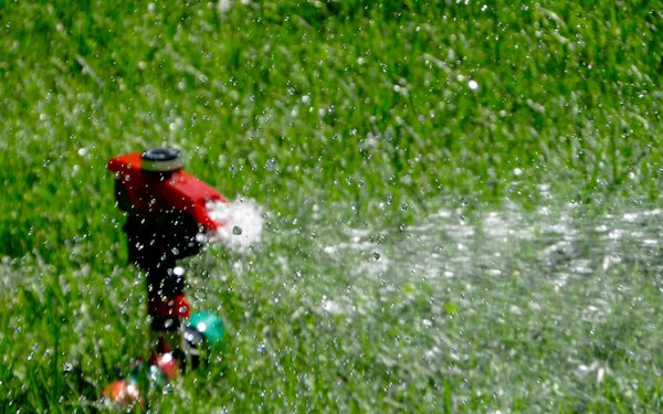 Red sprinkler head in lush green lawn showering water towards lower right of frame